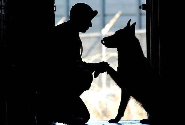 amour entre un chien et son maître