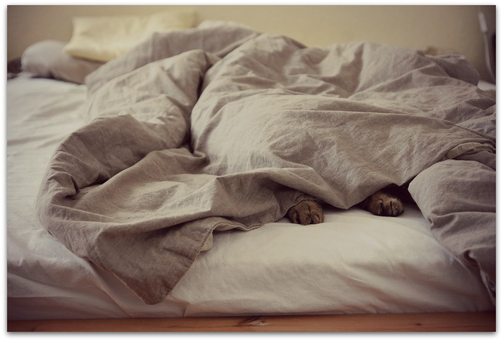 couette chat