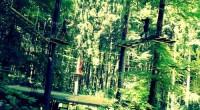 Oserez-vous le parcours dans les arbres ?