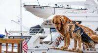 deux chiens sur un bateau prets a voyager